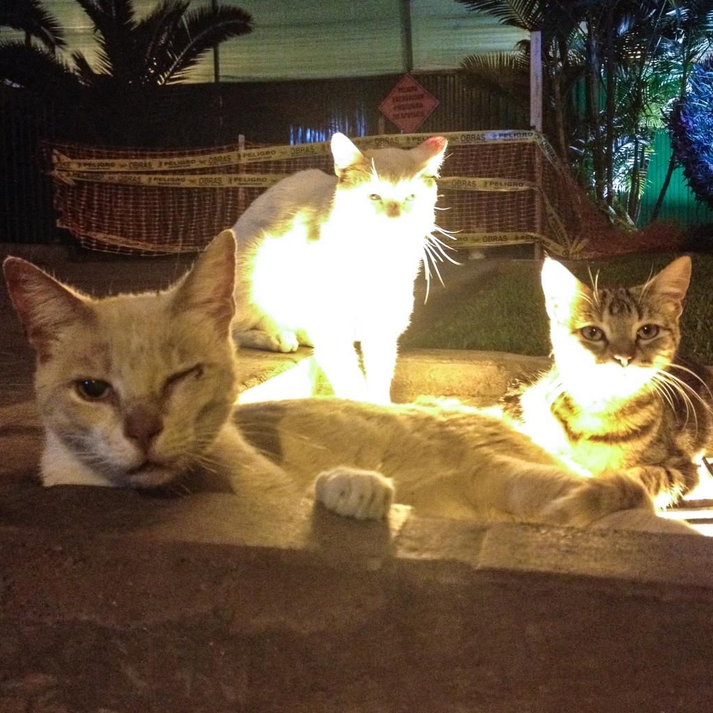 Lima cat park